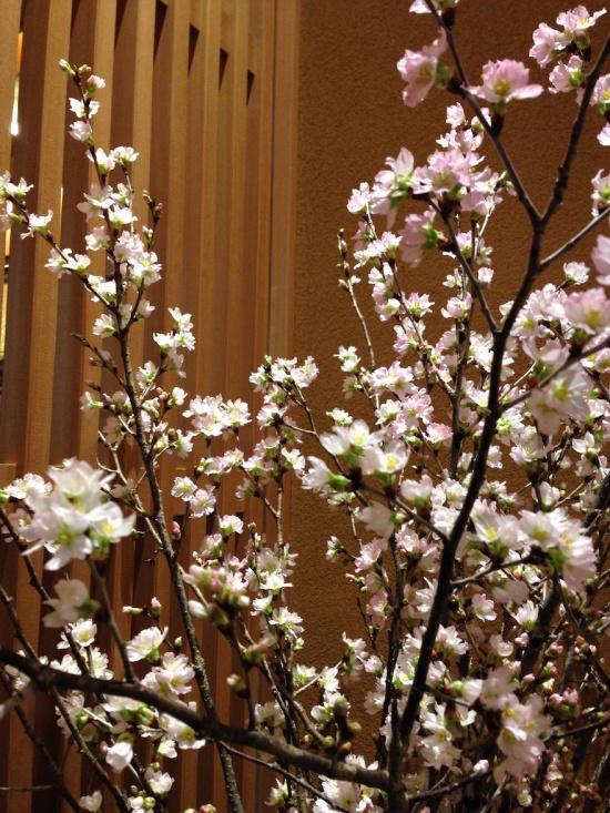 寒桜 宝泉 京都