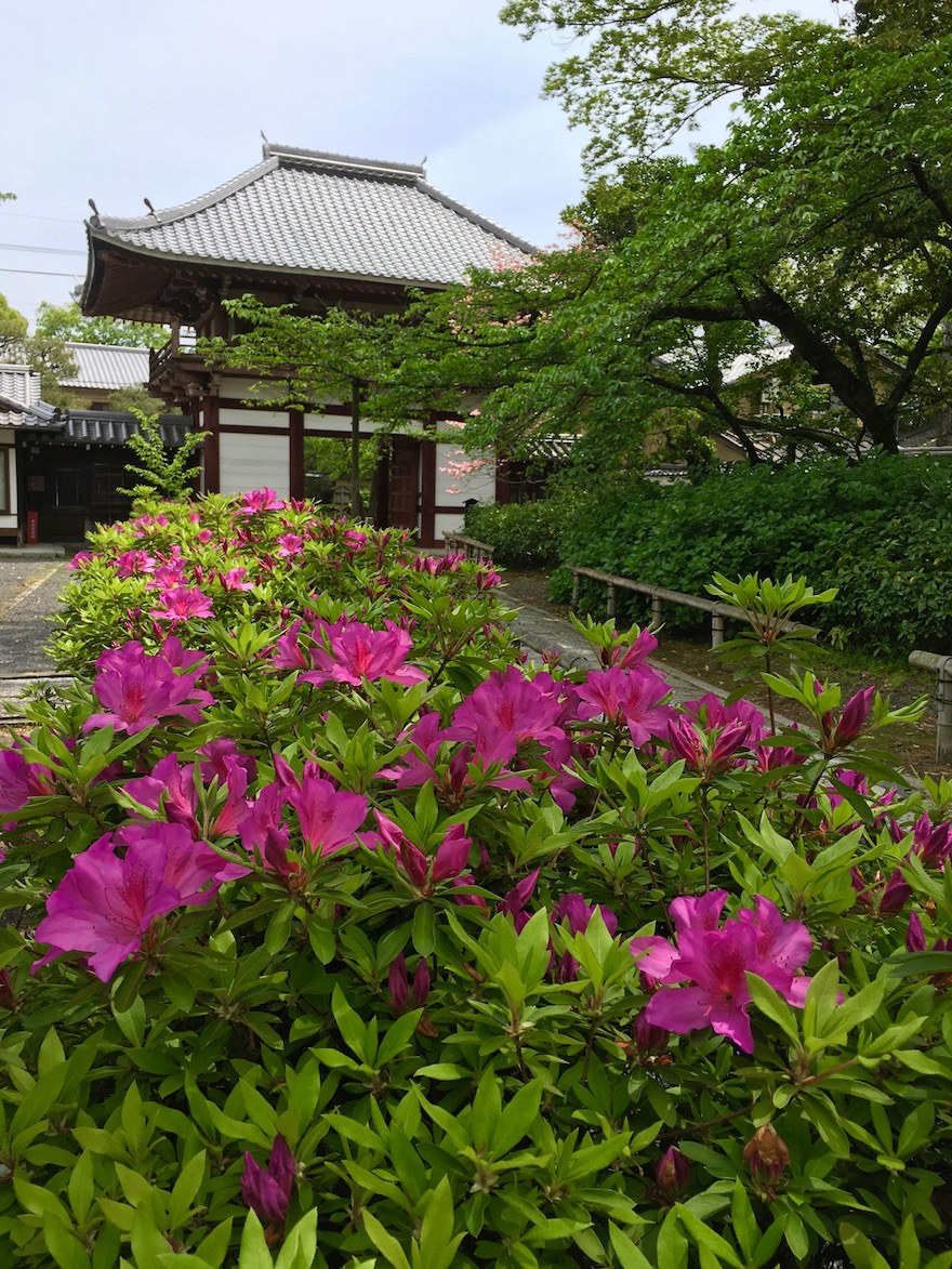 京都 本法寺 経蔵院3