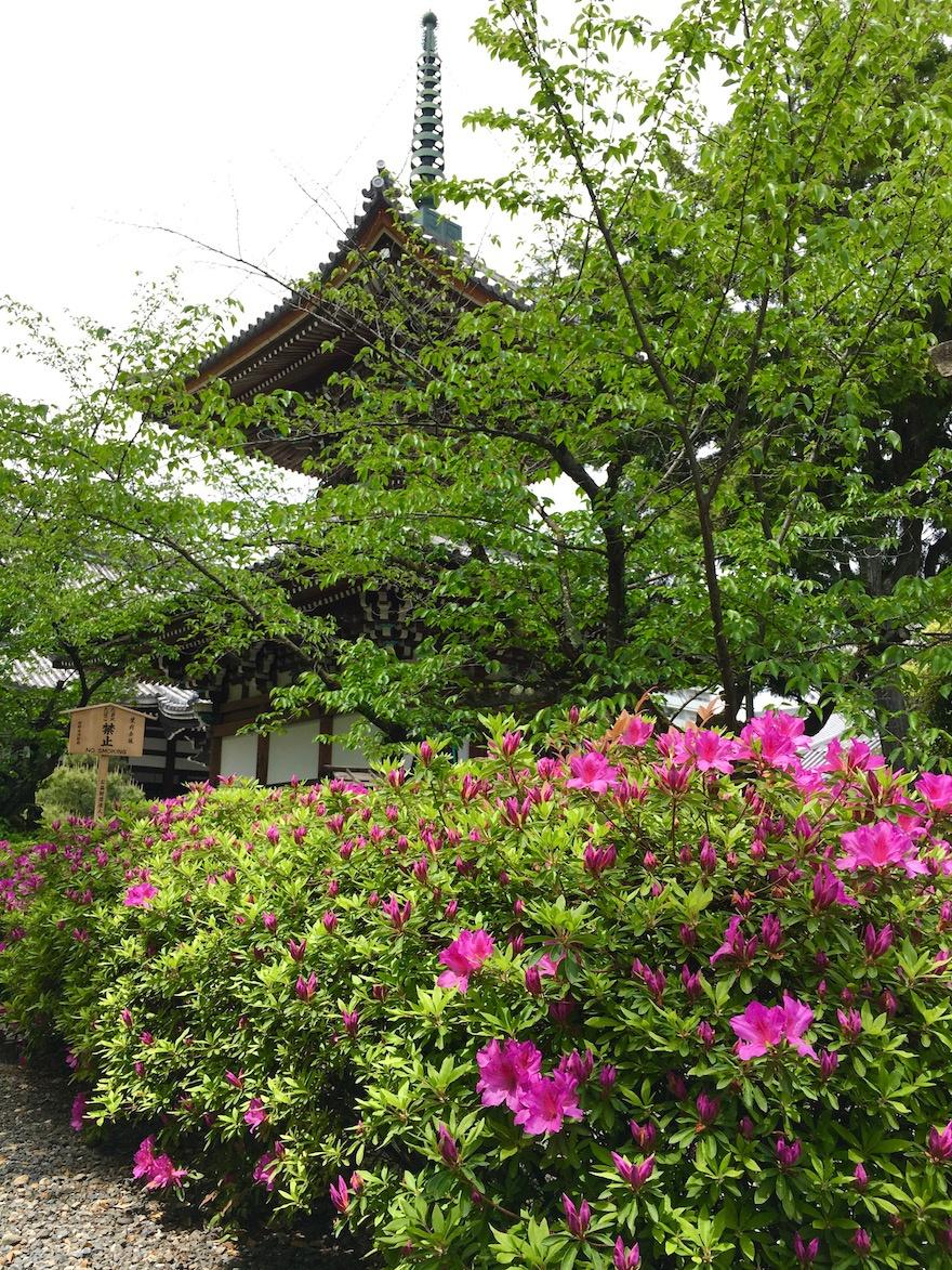 京都 本法寺 経蔵院1