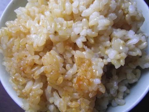 よそった玄米ご飯